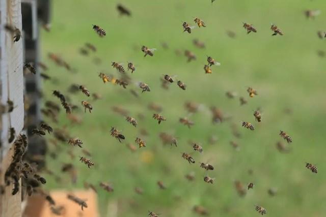 Bijen zijn belangrijk 3