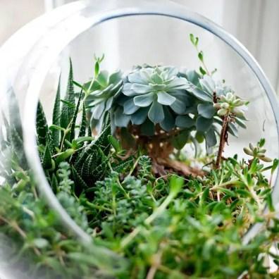 4 creatieve manieren om meer planten in huis te halen
