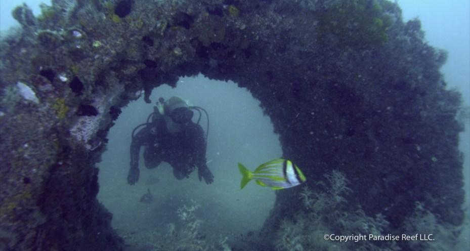 scuba diving research paper