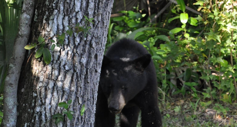 Florida Panther National Wildlife Refuge  Naples Marco Island  Everglades