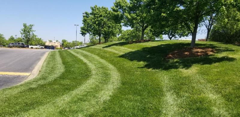 Seed and Fertilized, maintained landscaping for business.