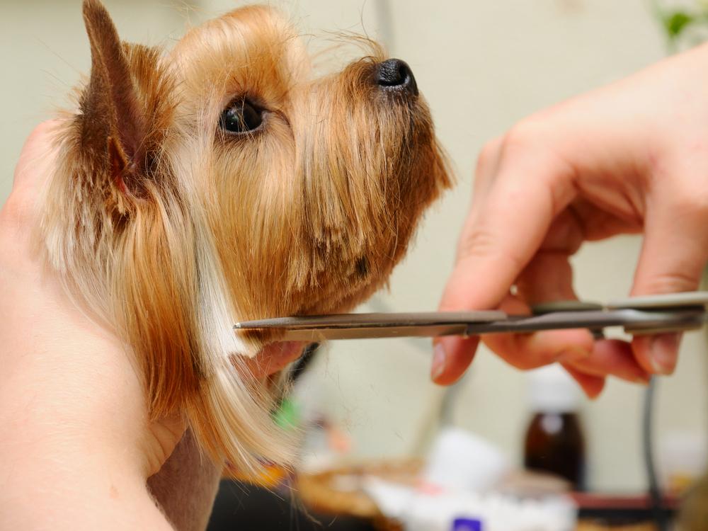 Dog Grooming. Pet Grooming. Cat Grooming