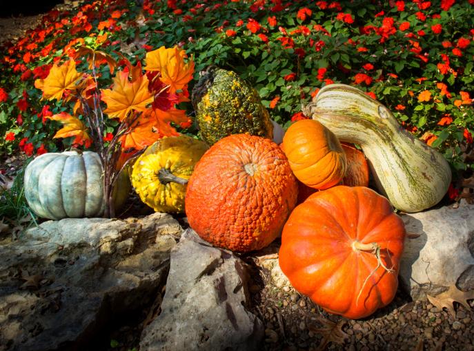 Fall Gardening Tips Garden Design Garden Design With Fall