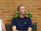 Papageien2.jpg