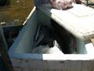 Fischkauf13.jpg