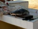 Fischkauf16.jpg