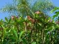 Pflanzen und Natur