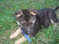 Unser Hund Wilma