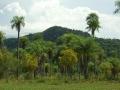 Paraguari