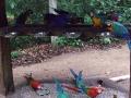 Vogelpark_66_2.JPG
