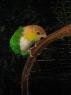 Vogelpark_7_1.JPG