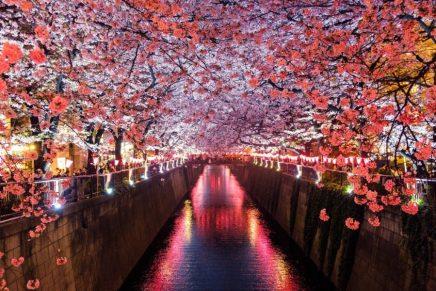 Japon flor cerezo nacionalidad