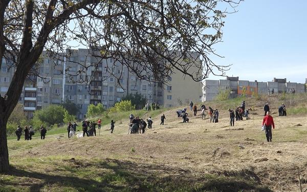 В края на април общинското ръководство и жителите на квартала засадиха свлачищния баир