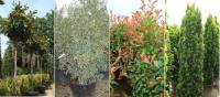 Block unsightly views. Evergreen Screening Plant Solutions