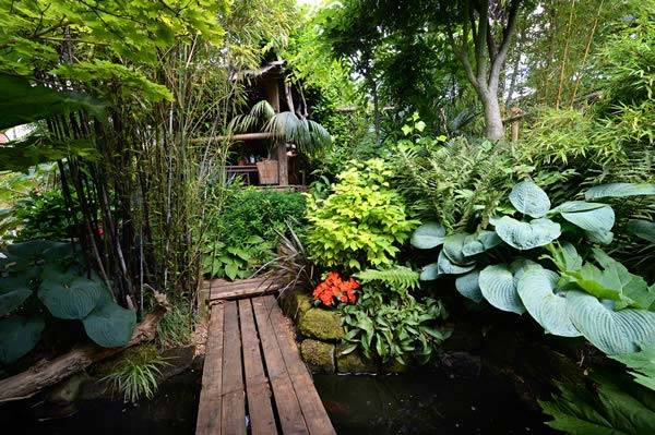 Hardy Exotic Plants To Grow In The UK Nick Wilson's Garden