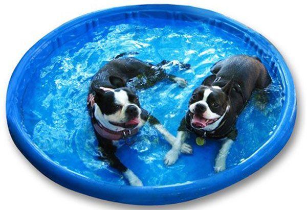 Piscinas para Perros Baratas  Mejores Precios