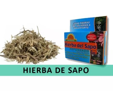 beneficios-hierba de sapo