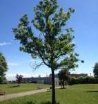 Parco Polì – percorso botanico area ovest