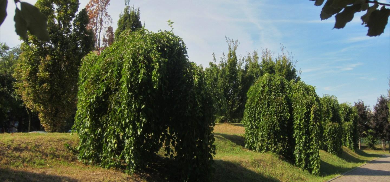 Percorso Botanico Parco Polì area est-nord
