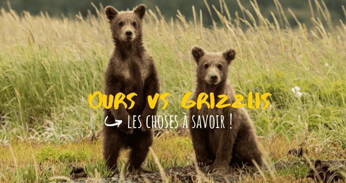 ours et grizzlis trucs et astuces