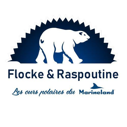 Flocke et raspoutine - les ours polaires de Marineland