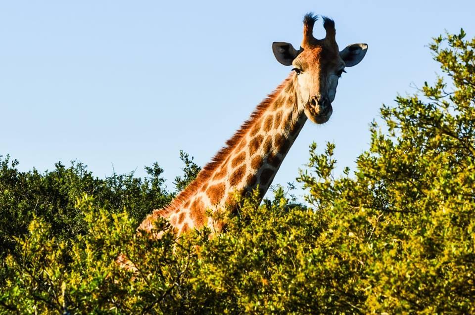 Shamwari Private Game Reserve – Eastern Cape