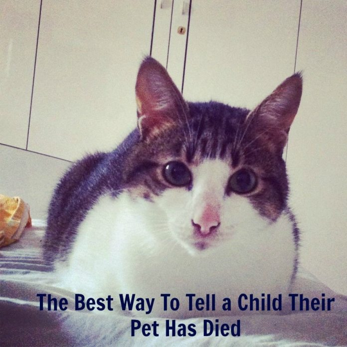 how to tell a child about death of a pet