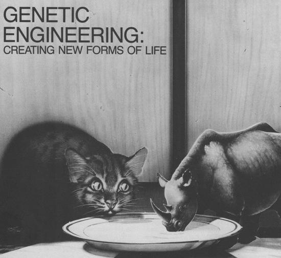 Zero iq genetic engineered thai willing