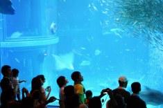 aquarium osaka 7
