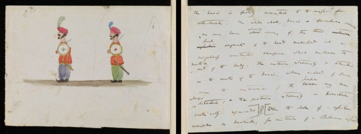 enfant-dessin-darwin-manuscrit-origine-espece-03