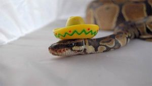 Snakes in Hats.