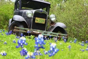 Parenthood and Passports - Fort Worth Bluebonnets