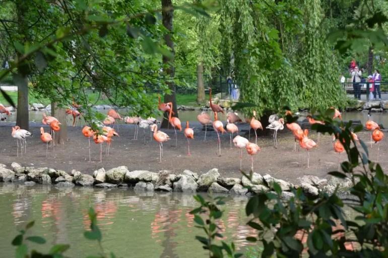 zoo de beauval - nature-voyage et enfant-blog de voyage