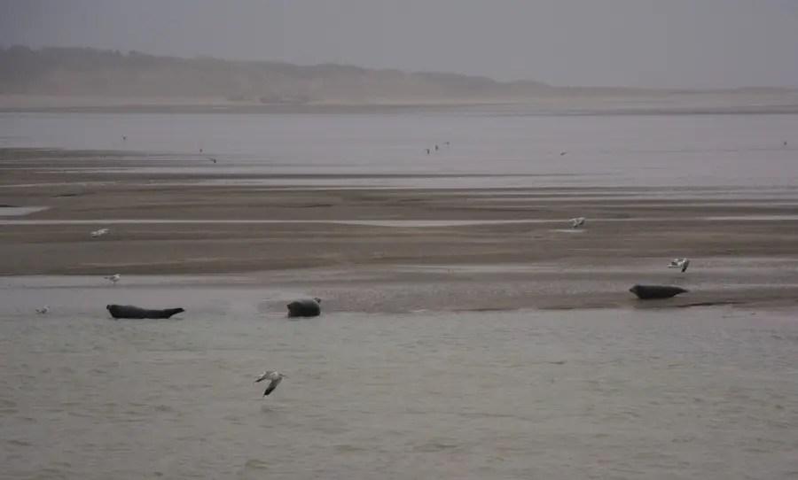 week-end dans la baie de somme en famille - où voir des phoques