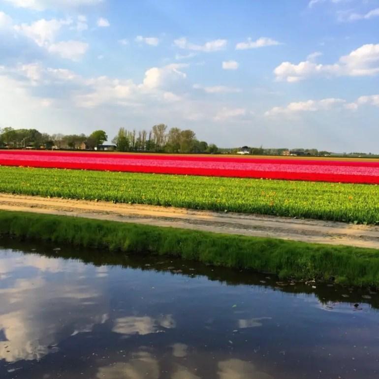 parc de Keukenhof avec des enfantschamps de tulipes
