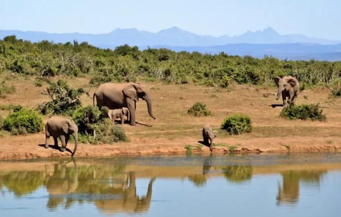 éléphant dans la brousse, au bord d'un lac tanzanie, un safari en Tanzanie