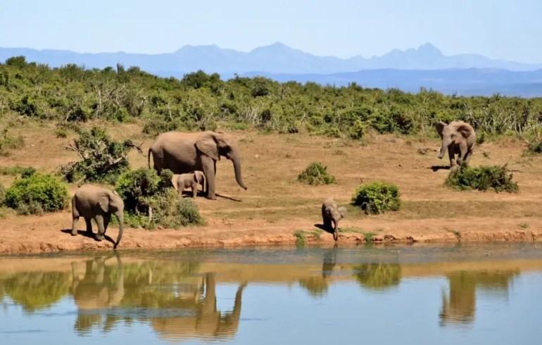 safari en Tanzanie éléphant dans la brousse, au bord d'un lac tanzanie, un safari en Tanzanie