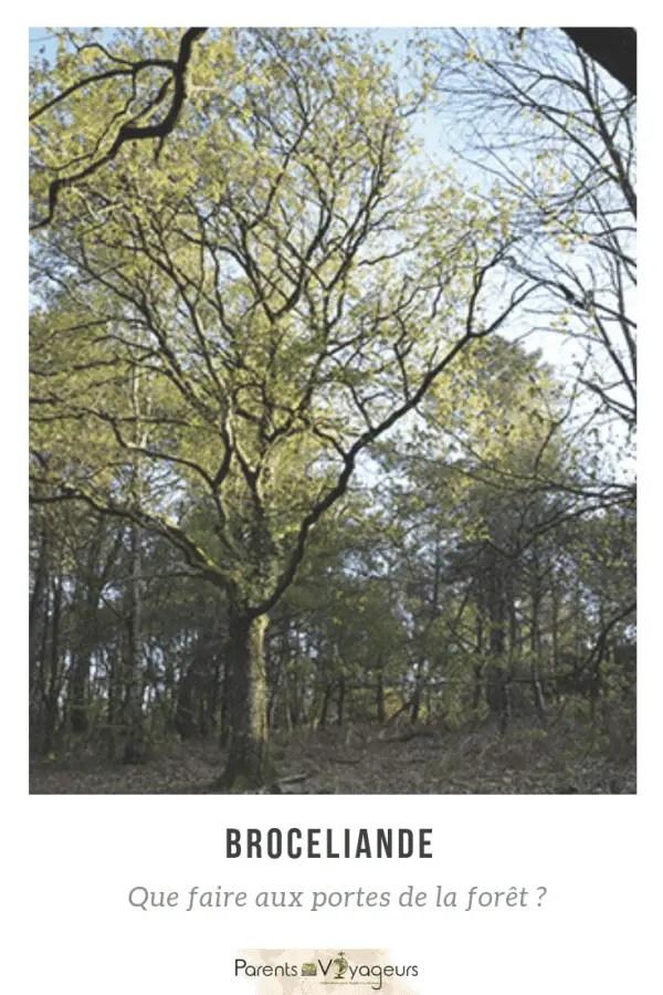 La forêt de Brocéliande en famille que voir/que faire ?