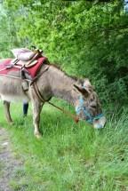 Loisirs Loire Valley âne de randonnée broutant l'herbe blog voyage en famille