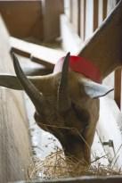 chèvrerie granville Normandie en famille