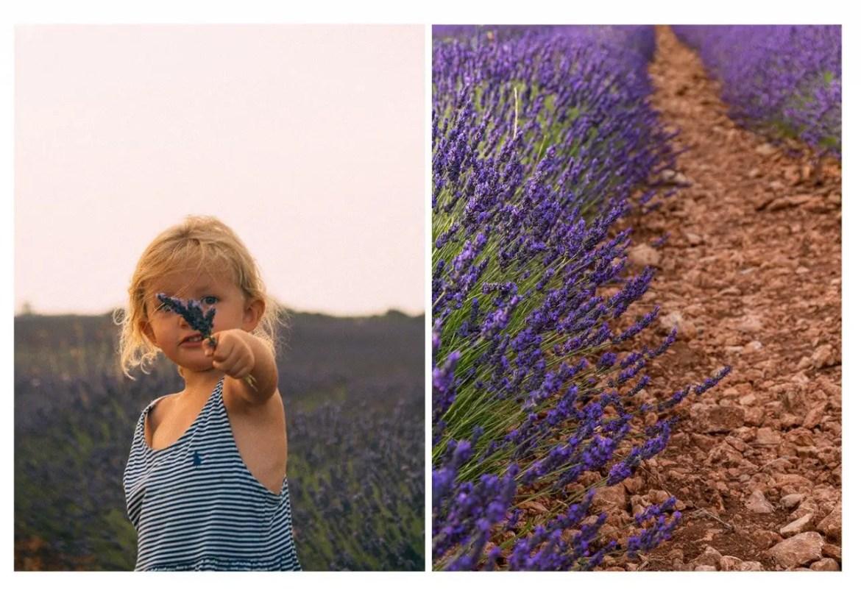 champs de lavande en espagne brihuega