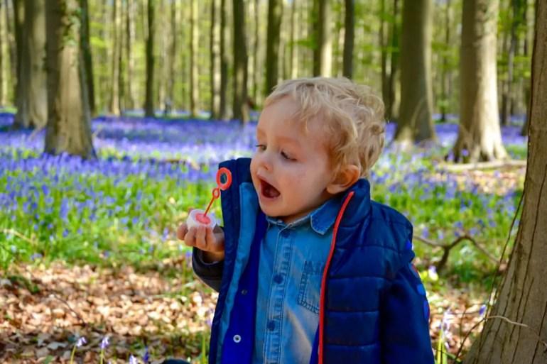 visiter la forêt de hallerbos (bois de hal) en belgique