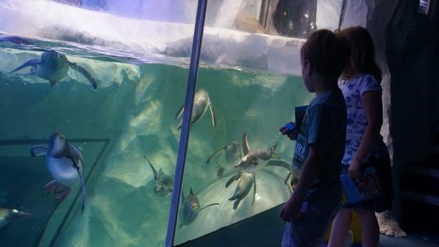 penguins swimming