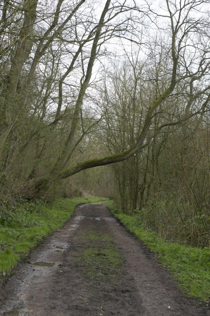 Bunny Wood - 06