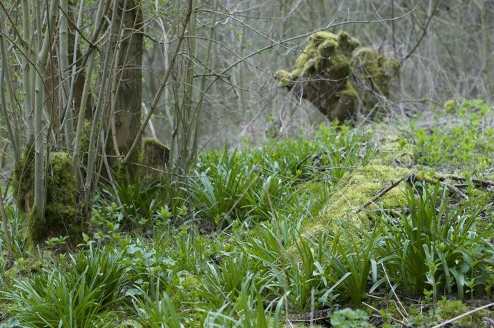 Bunny Wood Nature Walk - 5