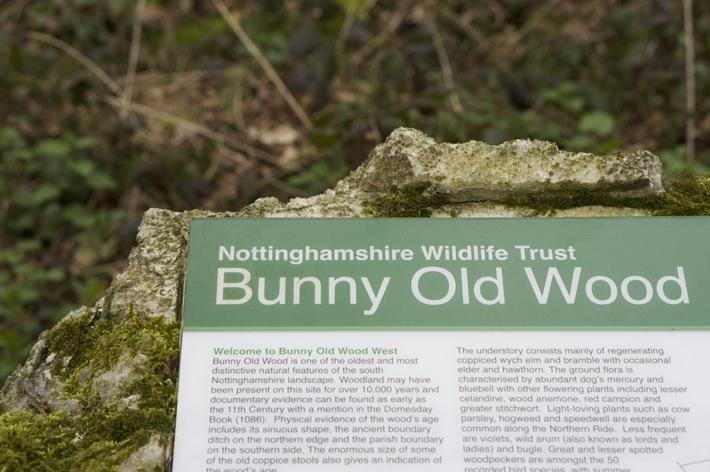Bunny Wood Nature Walk - 9