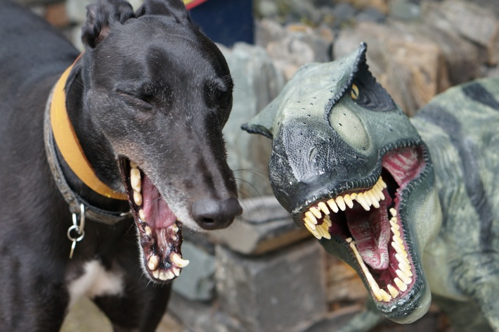 Dog and Dinosaur