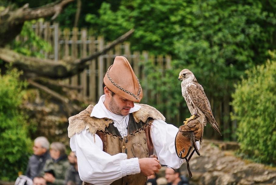 Puy Du Fou bird show, handler prepares a snack for a hawk