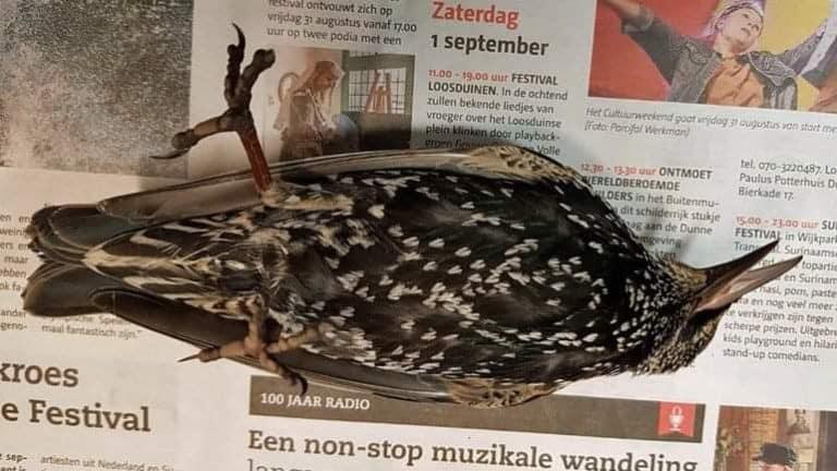 No. La rete 5G non ha ucciso uccelli in Olanda.