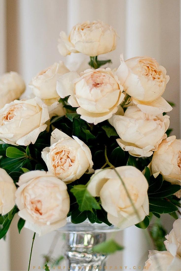 Cream Garden Rose